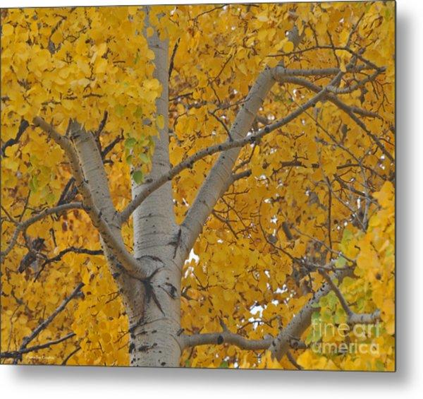 Yellow Aspen Autumn Tree Grand Teton National Park Metal Print