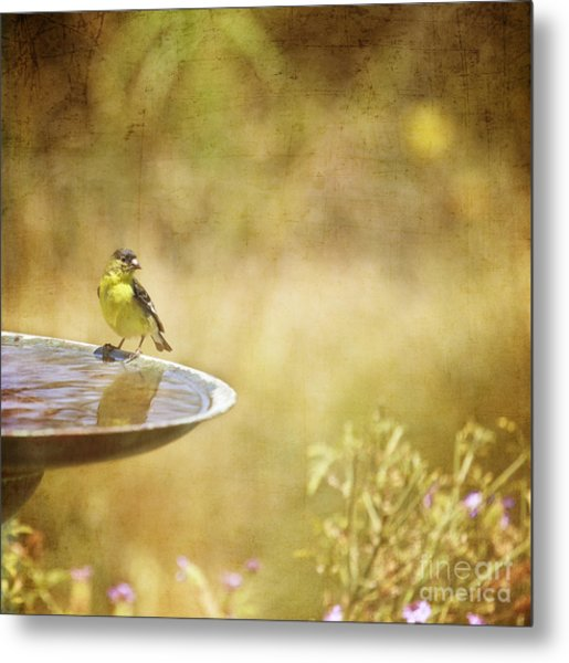 Yellow Bird Upon A Fountain Metal Print