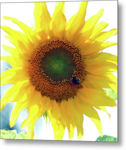Yellow Day Metal Print