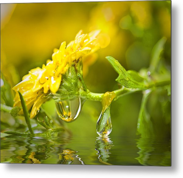 Yellow Drop Metal Print by Trudy Wilkerson