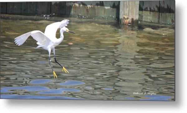 Yellow Feet Metal Print