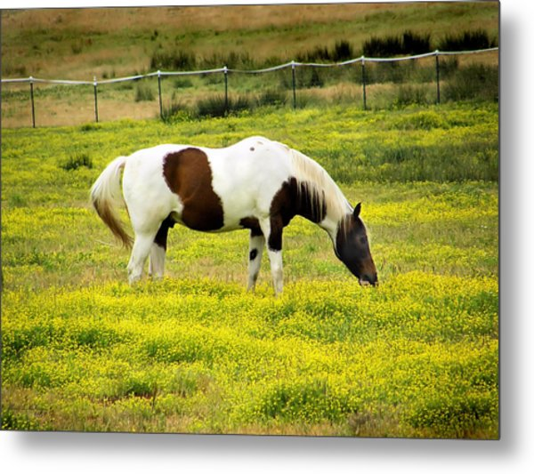 Yellow Fields Horse Metal Print