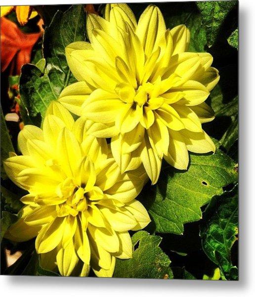 #yellow #flower #petals #closeup Metal Print