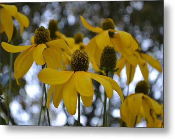 Yellow Flowers Metal Print by Naomi Berhane
