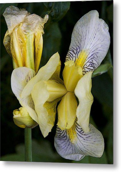 Yellow Iris Metal Print by Michael Friedman