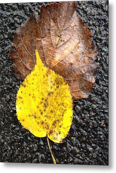 Yellow Leaf In Rain Metal Print