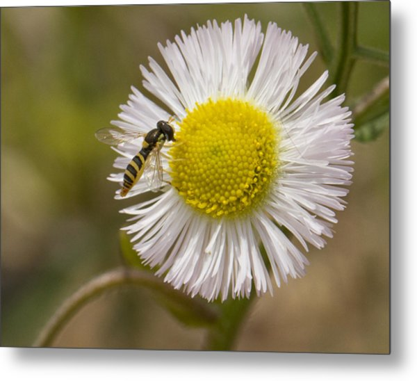 Yellow On Yellow Metal Print by Dean Bennett
