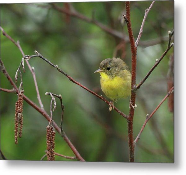 Yellowthroated Warbler Metal Print