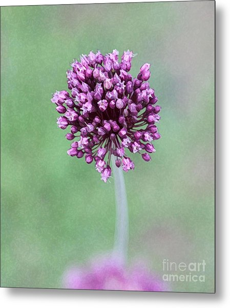 Yorktown Onion Metal Print by Marilyn West