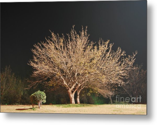 Young And Old - Winter Metal Print