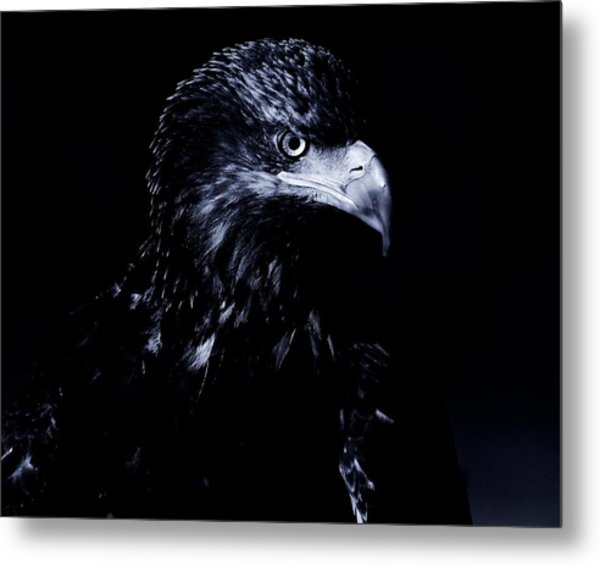 Young Eagle Metal Print