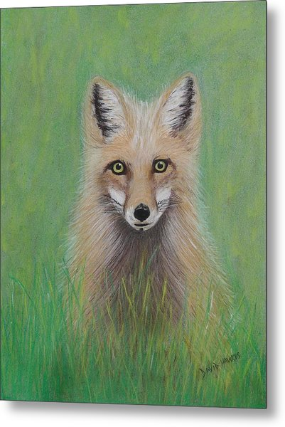 Young Fox Metal Print by David Hawkes