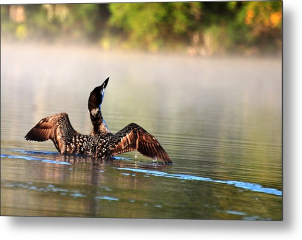 Young Loon Metal Print
