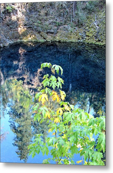 Young Maple At Blue Pool Metal Print