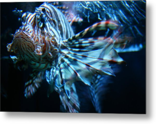 Your Lion Fish Metal Print
