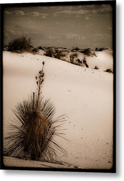 White Sands, New Mexico - Yucca Metal Print
