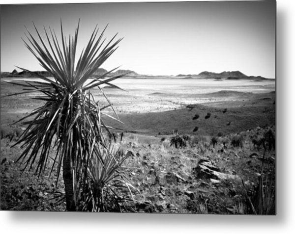 Yucca With A View Metal Print