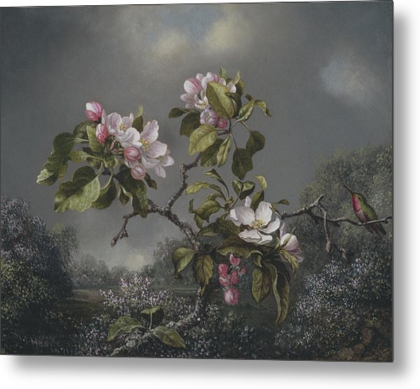 Apple Blossoms And Hummingbird Metal Print