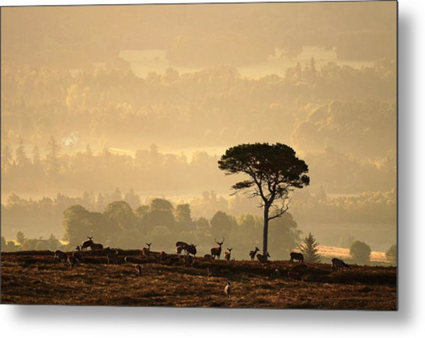 Autumn Morning, Strathglass Metal Print