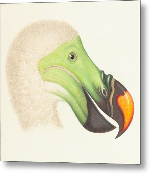 Collection Duck Metal Print