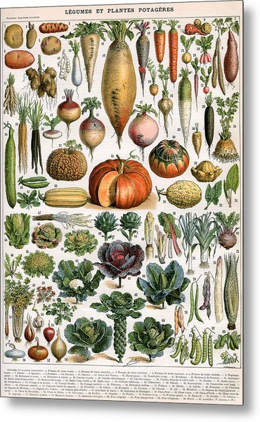 Illustration Of Vegetable Varieties Metal Print