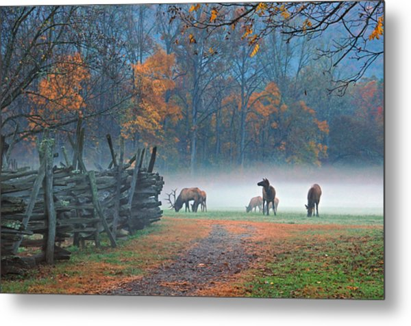 Oconaluftee Visitor Center Elk Metal Print