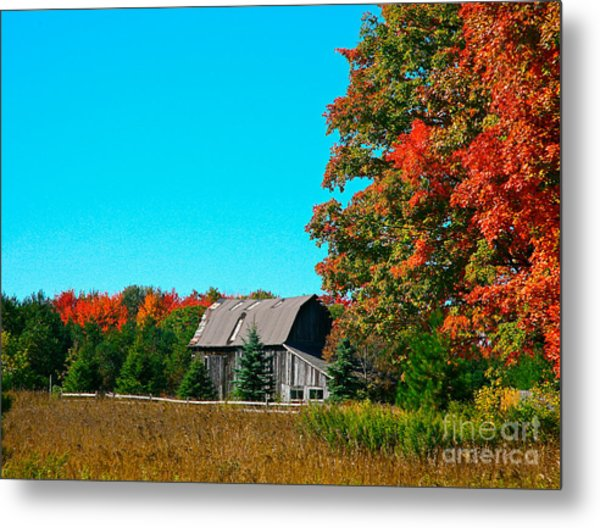 Old Barn In Fall Color Metal Print