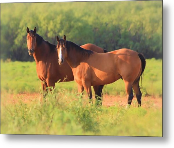 Two Horses Watching Metal Print