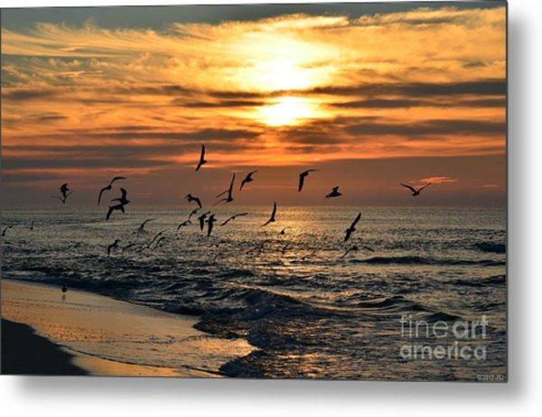 0221 Gang Of Gulls At Sunrise On Navarre Beach Metal Print