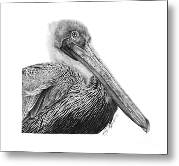 047 - Sinbad The Pelican Metal Print