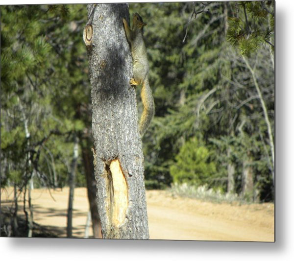 Squirrel Home Divide Co Metal Print