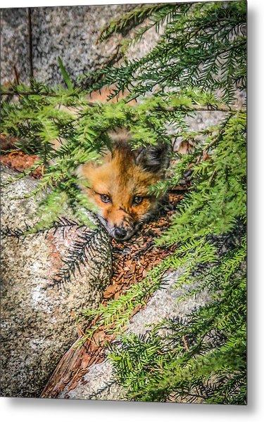#0527 - Fox Kit Metal Print