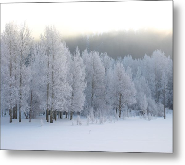 A Frosty Morning Metal Print