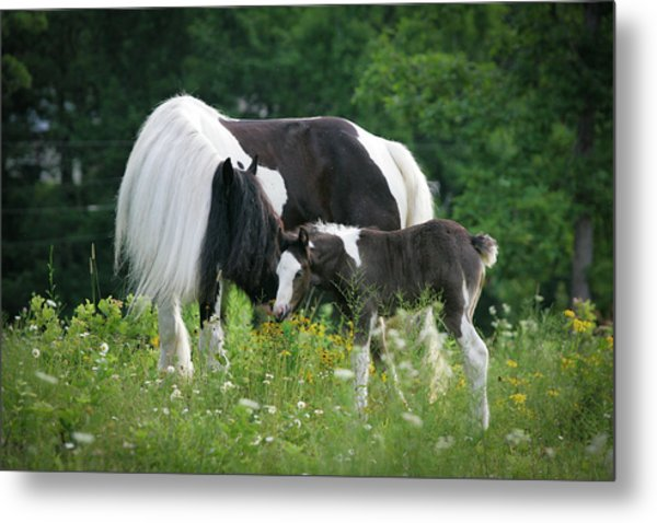 A Mother's Love Metal Print by Laurie Comfort