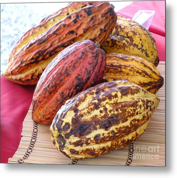 A Pile Of Cacao Pods Metal Print