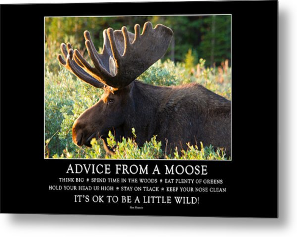 Advice From A Moose Metal Print