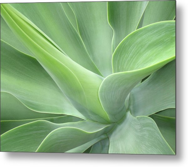 Agave Attenuata Abstract Metal Print