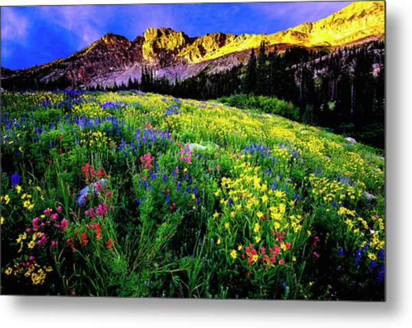Metal Print featuring the photograph Albion Basin by Norman Hall