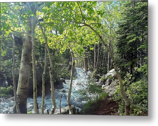 Along Alberta Falls Trail Rocky Mountain National Park Metal Print