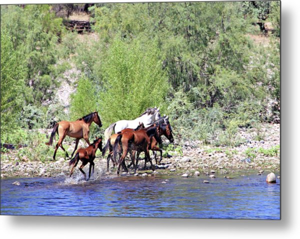 Arizona Wild Horses Metal Print
