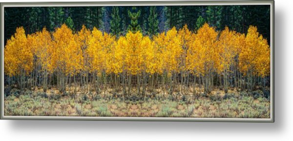 Metal Print featuring the photograph Aspen Stand by Sherri Meyer