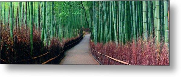 Bamboo Grove Metal Print