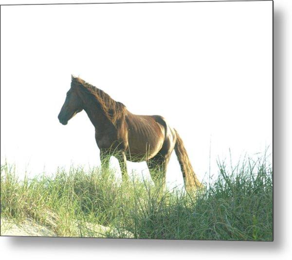 Banker Horse On Dune - 2 Metal Print