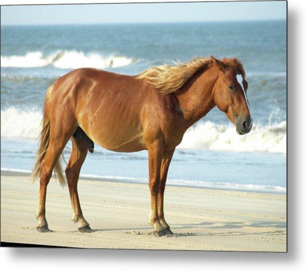 Banker Horses - 2 Metal Print