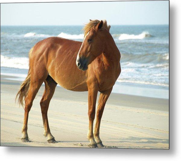 Banker Horses - 6 Metal Print