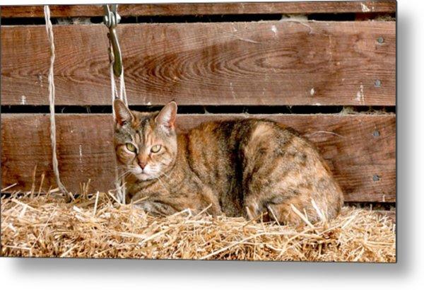 Barn Cat Metal Print