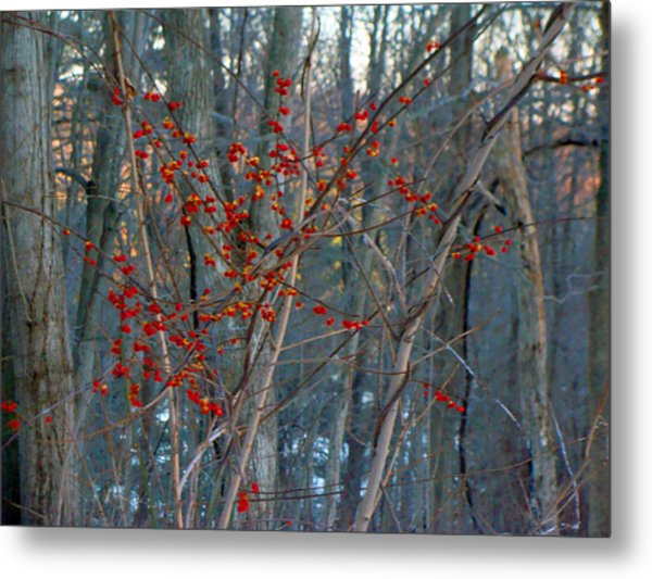 Berries In Bloom Metal Print by Kate Collins