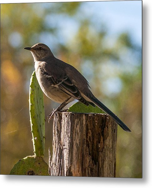 Bird On A Post Metal Print