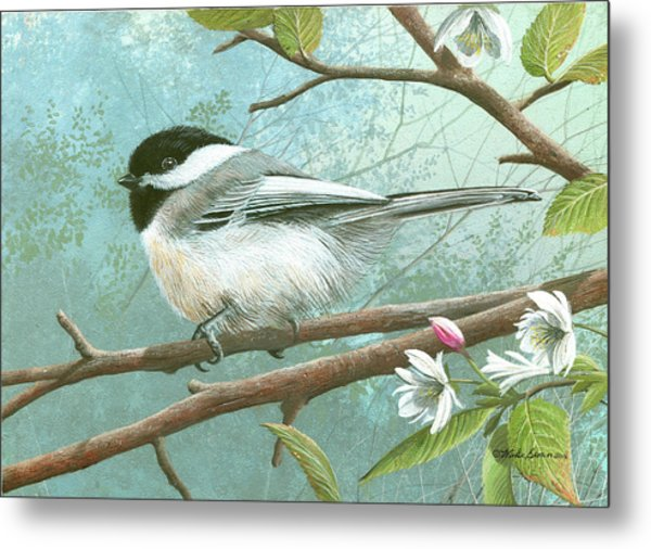 Black Cap Chickadee Metal Print