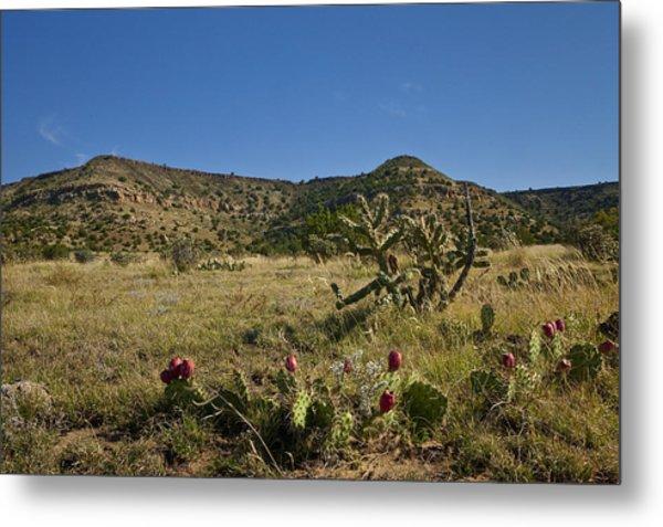 Black Mesa Cacti Metal Print